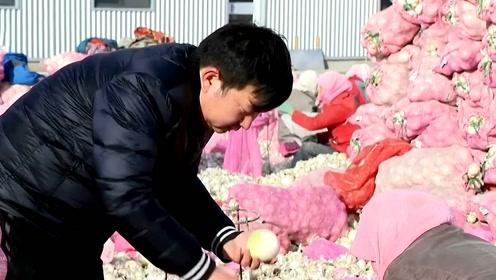 印度洋葱禁止出口,中国甘肃农民得利了