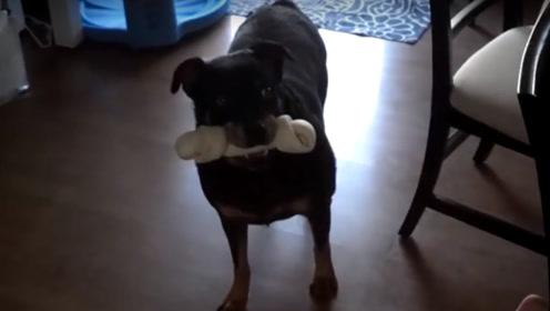 狗子每次啃骨头都躲起来,小伙感觉不对劲,悄悄跟踪发现狗子大秘密