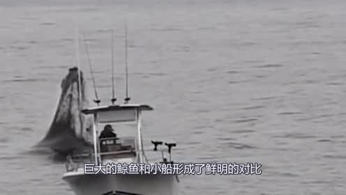 小船在海中行驶!不料座头鲸突袭!网友:这也太危险了!
