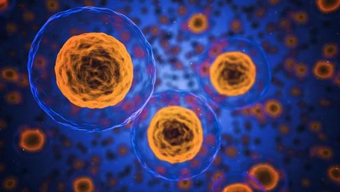 【生物大师 高中】细胞器之间的协调配合——超级工厂