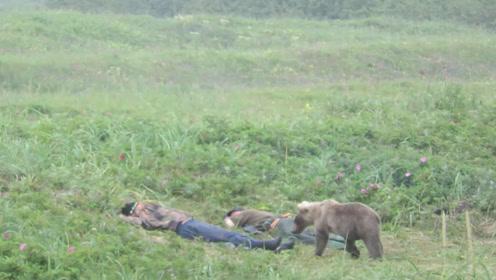 俄罗斯大叔在草地上睡觉,忽然一头棕熊走了过来,接下来憋住别笑