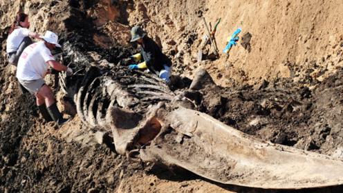 加拿大出现海怪化石,距今已7000万年,曾是恐龙时代的霸主