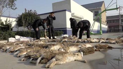 村民用猎狗撵兔子捕杀野兔138只:尸体铺了一地,6人被控制