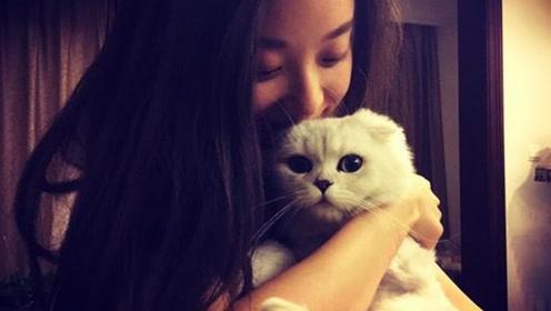 """倪妮工作室发布声明: """"虐猫""""纯属恶意诽谤"""