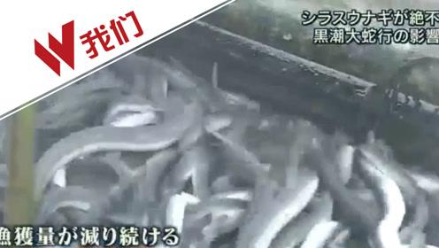 2分钟详解日本鳗鱼荒:捕鱼量仅去年百分之一 价格或飙升