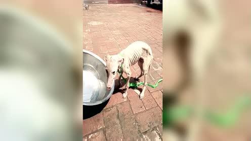 好可怜的狗狗 谁能收留它