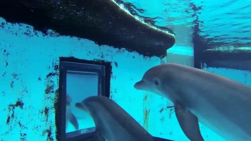 海豚的智商到底有多高,进去看看