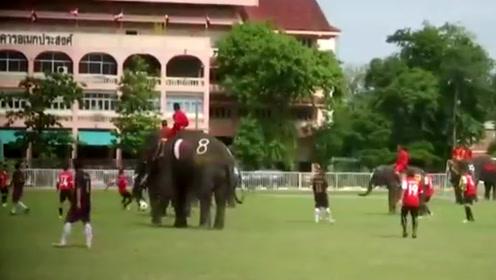 大城府喜迎世界杯 大象和大学生足球比赛再现上帝之手