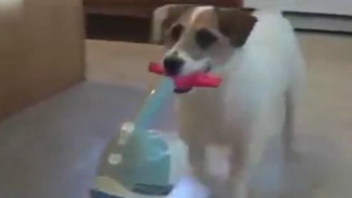 别人家的汪系列,有这样的狗子连保姆都不用请了