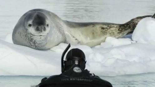 海豹担心摄影师会饿,不断捉企鹅并教他怎么吃,太暖了哈哈