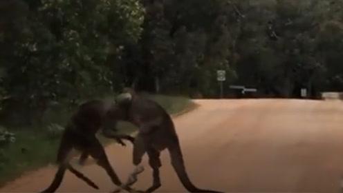 澳两袋鼠路中间干架火力全开 路人激情解说