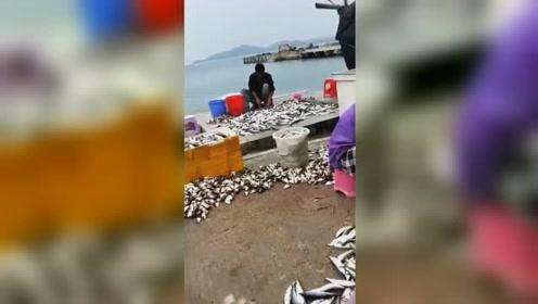 鱼群被冲上岸密密麻麻布满沙滩 村民开启狂运鱼模式