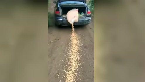 以为司机在浪费粮食,镜头反转那一刻,我真的要给司机一个赞!