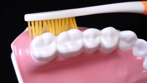 刷了20多年牙才知道,原来一直都刷错了,难怪天天刷还越来越黄