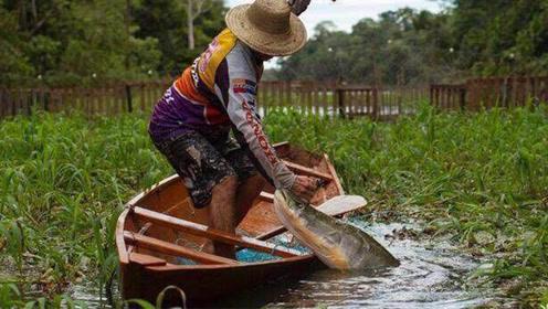 被称为世界上最蠢的鱼,见到捕鱼船就往上跳,国家不得不保护它