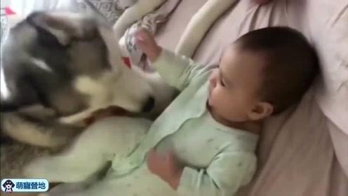 狗狗见小主人无聊,立马逗小主人开心,画面十分有爱!