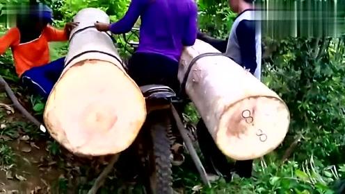 印度小伙真流弊,这么粗的两根树木,用摩托车就运走了!