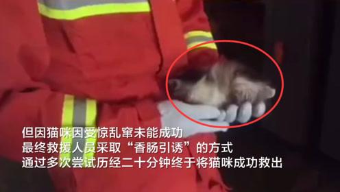 小猫被困汽车引擎盖十多小时 消防员采取香肠引诱将其救出