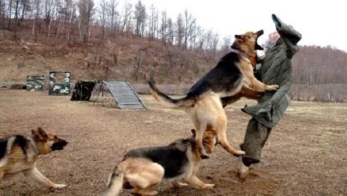 """为什么农村流传着""""咬过人的狗必须要打死""""的说法?看完涨知识了"""