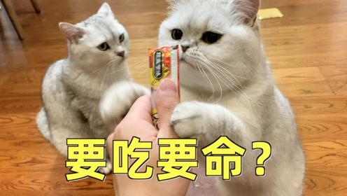 在超级凶的语气下,猫还会来吃你手上的小鱼干吗