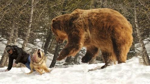 6个野生动物拯救人类的故事