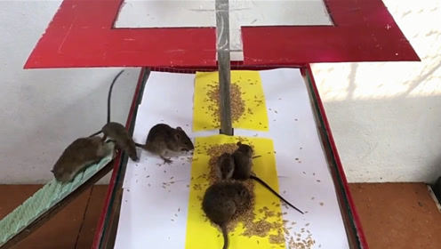 老鼠泛滥成灾,师傅忍无可忍自制捕鼠神器,试了试师傅笑了!