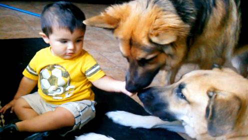 小宝宝非要喂猛犬吃饭,下一秒猛犬的动作,一旁的爸妈都傻眼了