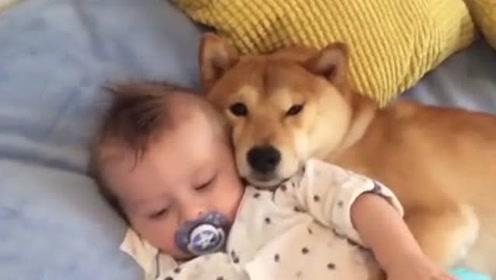 有狗狗陪伴的童年一定很幸福吧