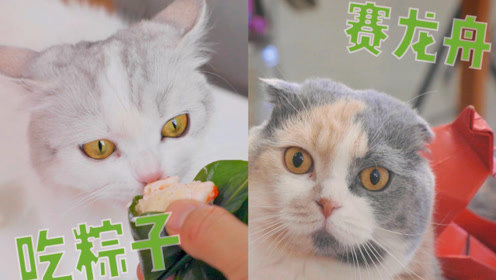 主人安排猫咪吃完粽子后赛龙舟,猫咪一脸后悔:吃人家嘴短啊!