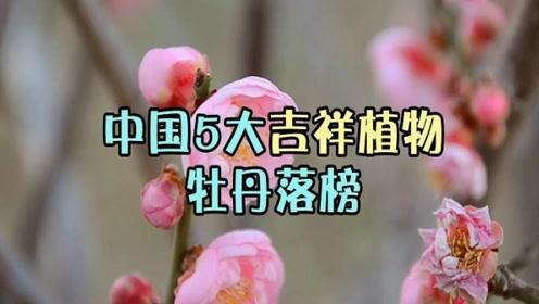 牡丹榜上无名?中国这5大吉祥植物你认识吗?兰花上榜!