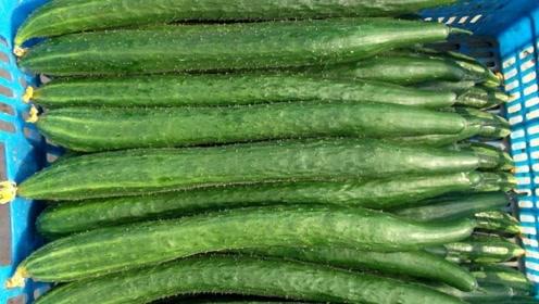 黄瓜买多了别放进冰箱了,教你一招,放一个月都翠绿鲜嫩不会坏