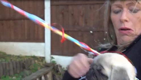 熊孩子给狗狗系氢气球,结果却飞上了天?网友:都是套路