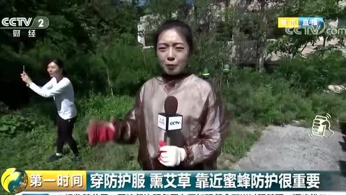 """小蜜蜂酿造大产业 韩国掀城市养蜂热潮 """"甜蜜经济""""渐入佳境 视频"""