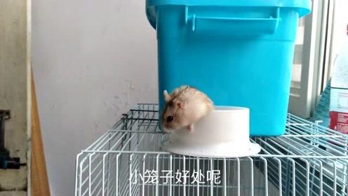 仓鼠进阶养法