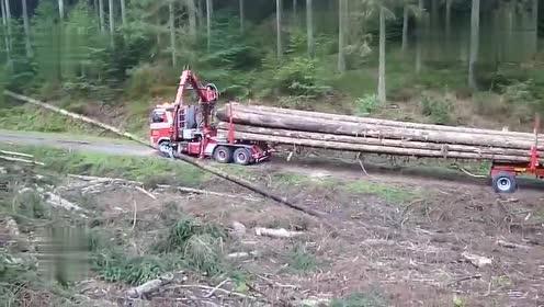 现代链锯砍伐大树,伐木楔形技术运输,这驾驶技术最少有30年驾龄