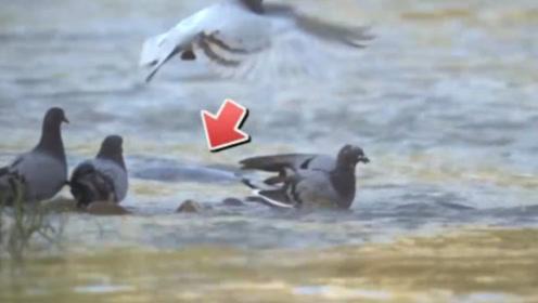 水中最狠生物!竟然可从水中飞起来吃掉飞鸟