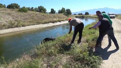 河里发现一头野猪,三个折腾半天才拉上岸