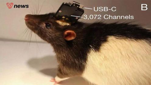 马斯克发布脑机接口系统!有望明年进行人体实验
