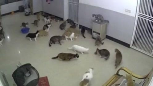 20只猫咪正闲得无聊,突然窜出一只肥壮老鼠,场面瞬间失控!