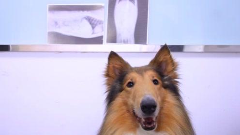 狗狗眼中的捡屎官是怎样的?觉得妈妈有魔力!