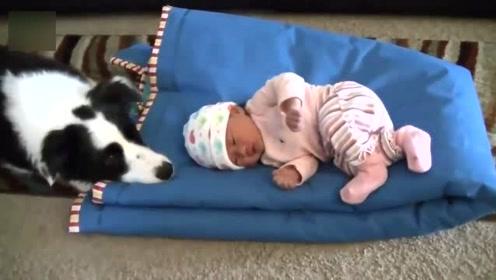 宝宝和宠物们相处,萌娃的表现,真的让人哭笑不得