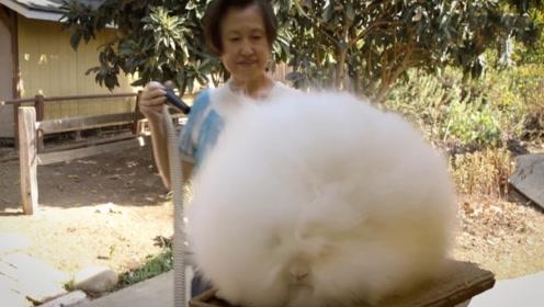 奶奶捡到一只大兔子,养3年不舍得吃,孙女回到家后瞬间愣住了