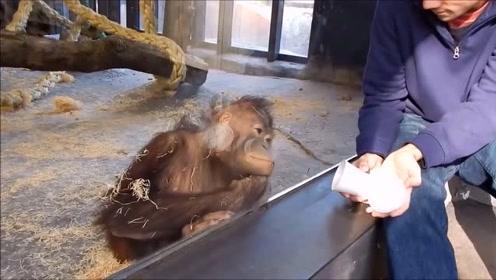 老外给猴子变魔术,变完之后,只剩猴子惊讶的张着大嘴!