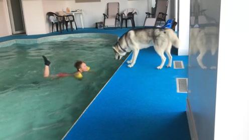 宝宝在哈士奇面前假装溺水,接下来二哈的反应,请憋住不要笑!