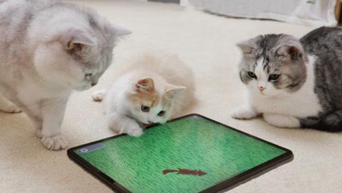 专为猫做的几款游戏 猫咪玩得太疯能把屏幕抠烂