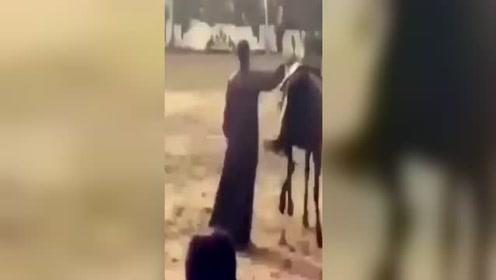 会蹦迪的马你见过吗? 节奏感超好下一秒就一蹄子踹到主人