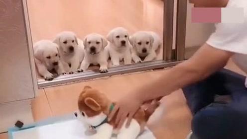 小狗们:你手里的狗子都没乱动你就打?你还是人吗?