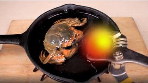 老外作死实验,1000°的金属球烤大闸蟹,结局实在意想不到!