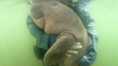 泰国海洋网红儒艮丧命,肠胃里的塑料引起感染死亡