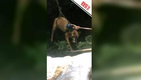 警犬掉沟里110求助119 被救后警犬腿软钻怀中求抱抱